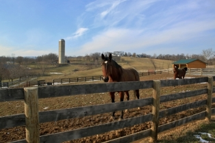 Horsey Critters 1(w)# (47)