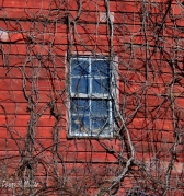 Barn Windows(w)# (11)
