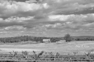 Landscapes in BnW# (2)