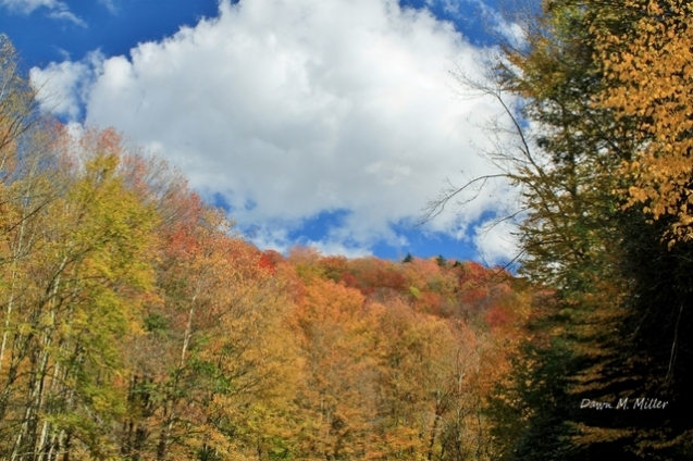vibrant-colors-of-cheat-mountain