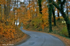 Magical Country Roads in Autumn# (2)