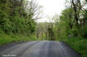 April Week 5 Spring on a gravel road